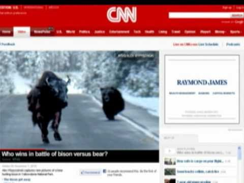 Yellowstone National Park Bear vs Bison goes viral