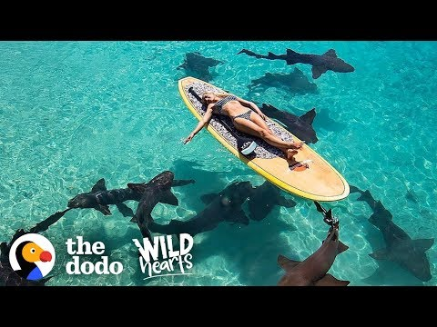 Watch This Marine Biologist Swim With Sharks | The Dodo Wild Hearts