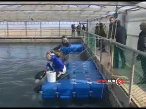 Спасение косаток и белух в Приморье обойдется миллионы рублей