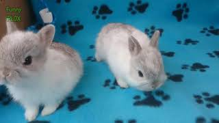 Ultimate CUTE and FLUFFY baby BUNNY rabbit compilation - Best of ...