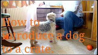 How to introduce a dog to a crate.