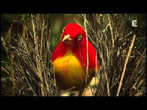 Les oiseaux dans la charmille natalie dessay surgery