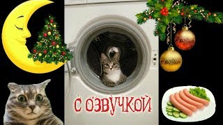 Приколы с котами – СМЕШНАЯ ОЗВУЧКА ЖИВОТНЫХ – Попробуй не засмеяться 2018 – DOMI SHOW