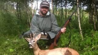 Охота на косулю с манком на гону