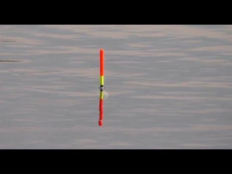 Красноперка на поплавок с берега