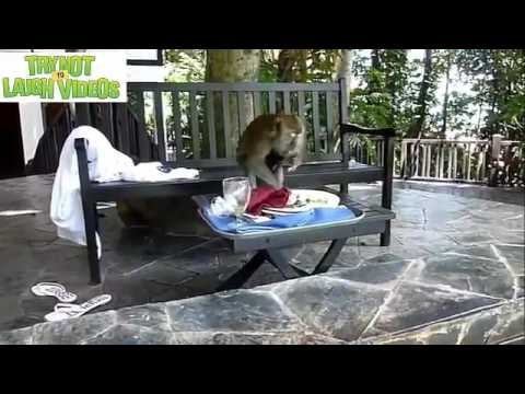 Funny Animals Videos - Hilarious Cats ,Cute kittens and puppies