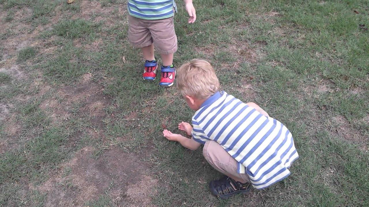 Catching frogs in backyard - YouTube