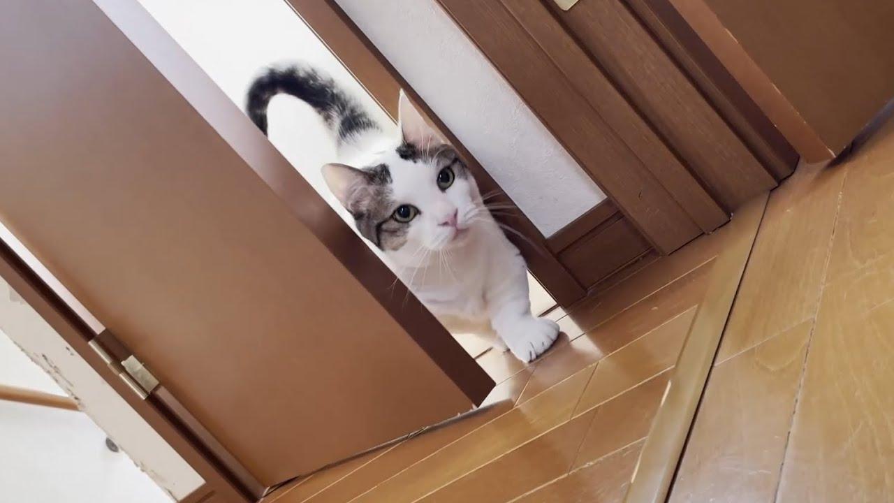 名前を呼ばれると、そこそこの勢いで登場する猫