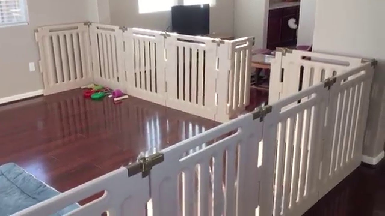 Two Dogs And Richell Convertible Indoor Outdoor Pet Playpen   YouTube