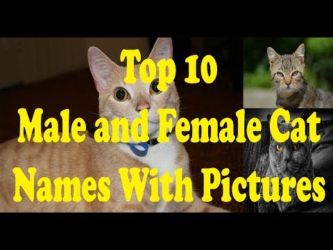Top 10 Male And Female Cat Names With Pictures||Canadian Best Cats Name 2019