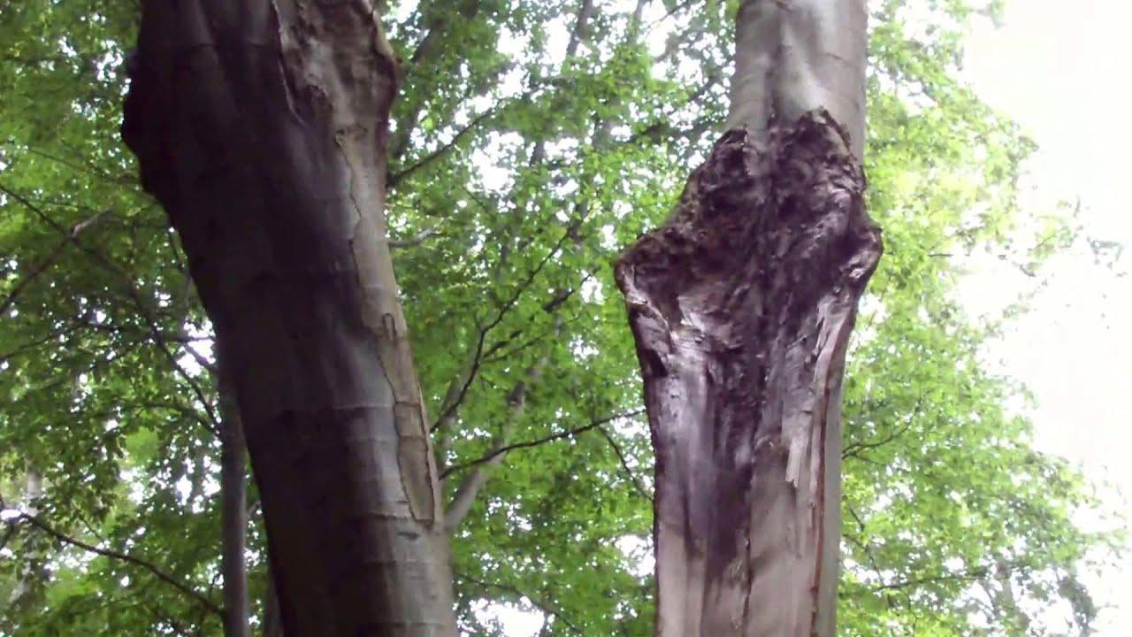 Lynnedslag i træ.