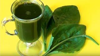 видео Алоэ – лечебные свойства и применение сока, настойки, сиропа