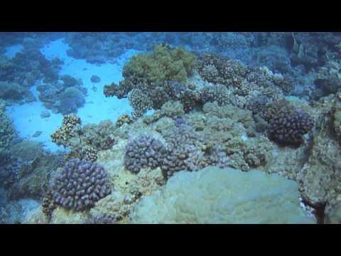 Safaga, egipt, nurkowanie, hd, diving, tauchen