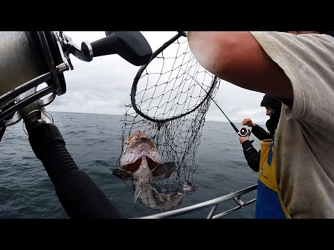 Bottom Fishing For Lingcod And Rock Fish In Westport