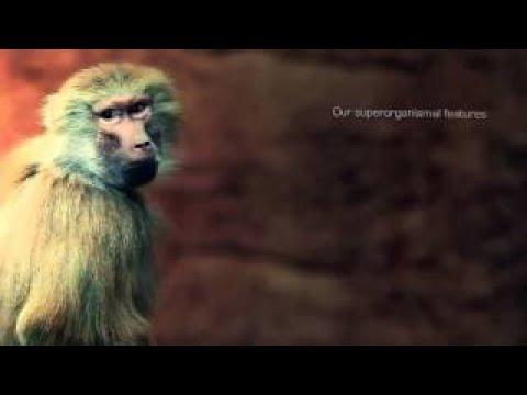 Resonance Mind Blowing 2017 Documentary HD
