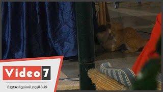 """صراع شرس بين """"قطتين"""" بنادى هليوبوليس فى ندوة لمرشحين بمصر الجديدة"""