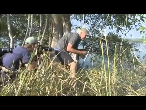 SUPERSIZE CROCS   Animals   Wildlife   Nature documentary
