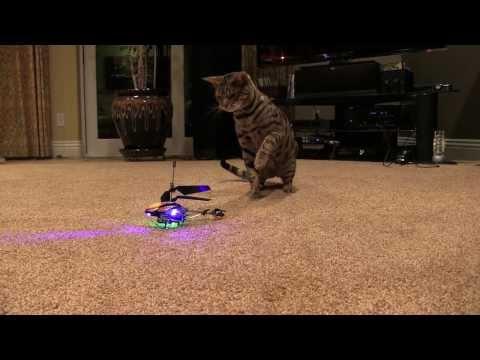 Tiger Cat Captures flying Drone