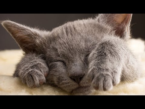 Cute Cat Videos That Will Make You Happy 🐈 Cute Cat Compilation