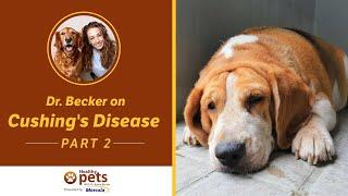 Dr. Becker on Cushing's Disease (Part 2 of 3)