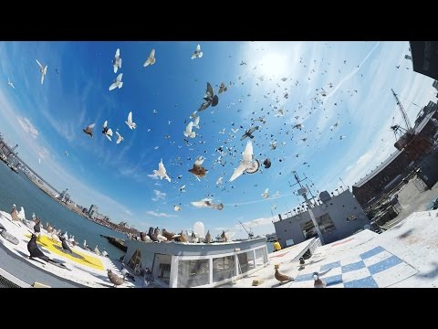 How Thousands of Pigeons Became Art (360 Video)