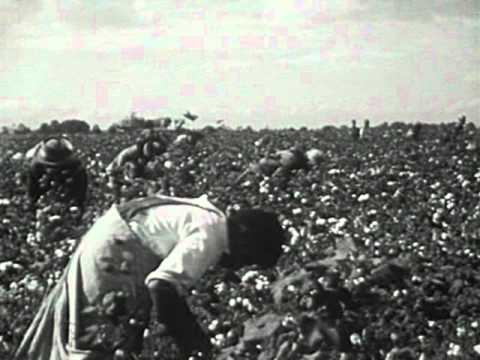 The Plantation System in Southern Life (1950)