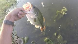 Bass Pond fishing near Reno Nv