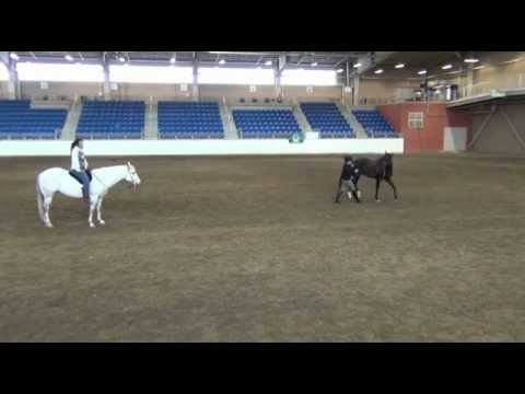 Pleasure Dressage: Classical Dressage for Everyday Riding