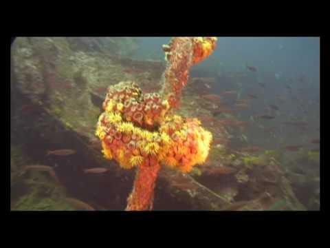 Enerdale wreck Mahé Seychelles
