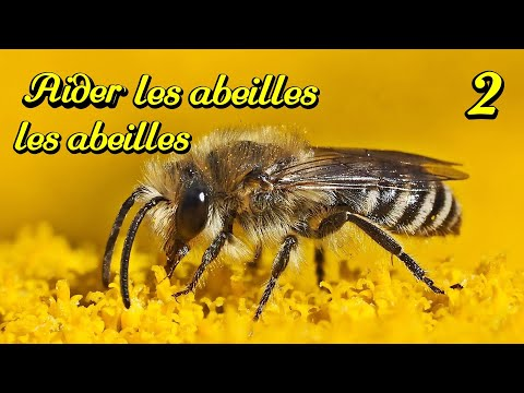 comment attirer les abeilles au jardin 2 2 h tel pour abeilles facile hd youtube. Black Bedroom Furniture Sets. Home Design Ideas