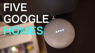 How Do A House FULL of Google Homes Interact? My Experiences