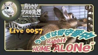 【 Live! 】ウサギは留守番中 0057 2019年3月22日 thumbnail