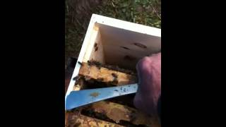 Setting Up Mating Nucs