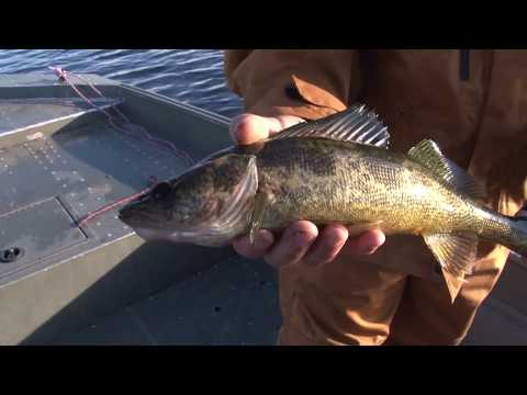 Dog Lake Walleye, Simply Breathtaking. Full Length Eps._S01