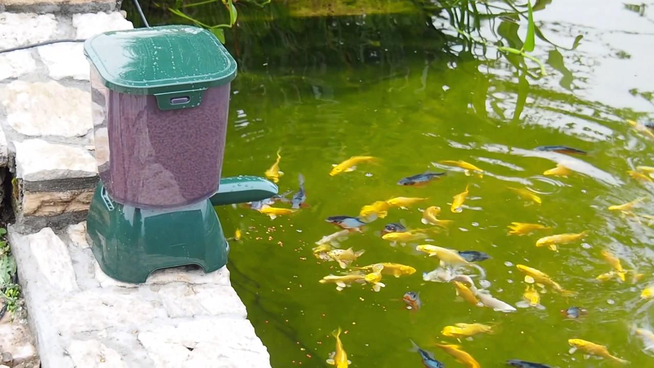 Mangiatoia automatica per pesci youtube for Laghetto per pesci
