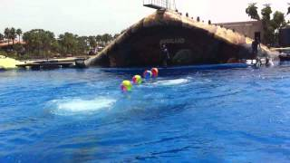 Dolphin Show At Aqua land Tenerife - Best Dolphin Show In The world
