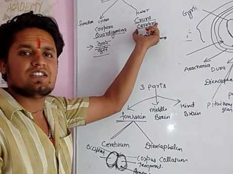HUMAN BRAIN with their parts(structure) and  functions/General studies(Biology) by Er. Gaurav Ralhi