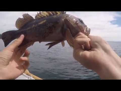 Fishing With Swimbaits For Rockfish Off Of Victoria Bc