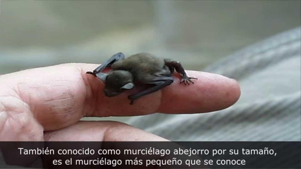 LOS 10 ANIMALES Mas Pequeños Del Mundo