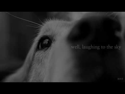 Dog & Butterfly | Heart | Lyrics ☾☀