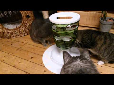 Kitties enjoying their Catit Senses 2.0 Food Tree