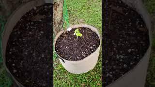 Garden Update 9/19/18