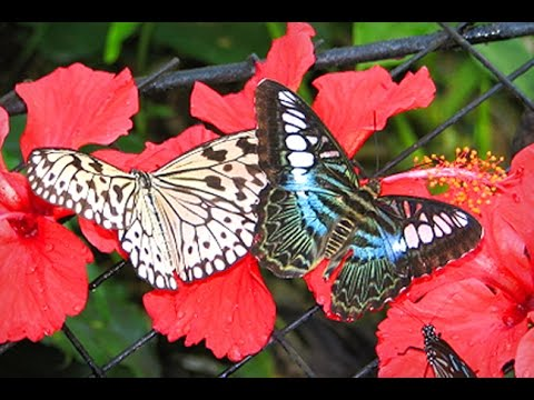 Beautiful Butterfly Park At National Park