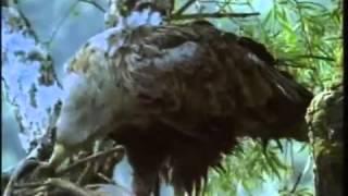 Серия фильмов о природе   Дельта Волги