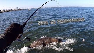 Port Phillip Bay Winter fishing report Fisherman vs Seal