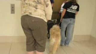 Lori's Therapy Dog Training Dvd(instructional)