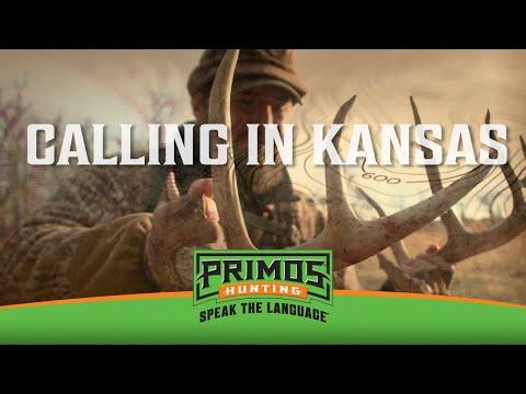 CALLING IN BUCKS TO BOW RANGE DURING KANSAS RUT!!