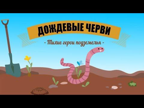 Дождевые черви   Познавательное видео про дождевых червей   Удивительный мир беспозвоночных