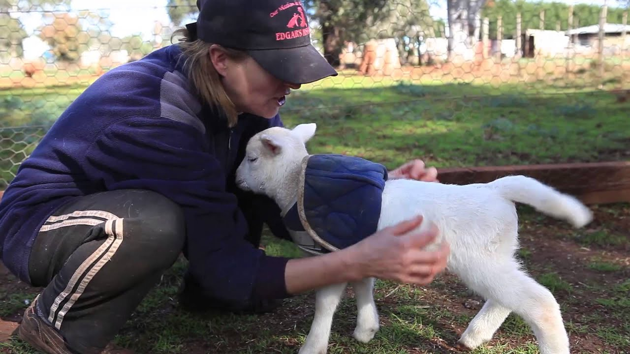 Lamb Lamb Style - YouTube for Happy Baby Lamb  54lyp