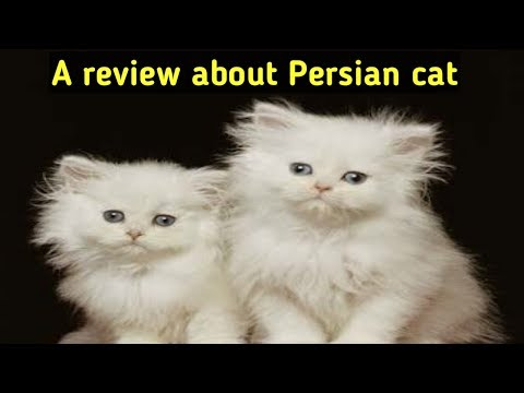 A review about persian cats
